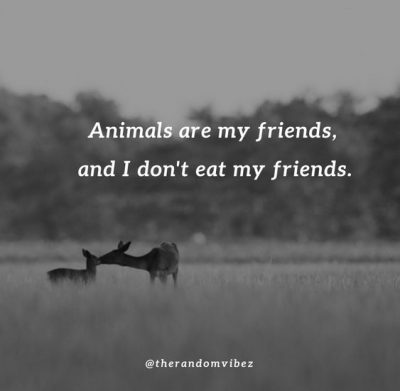 Inspirational Quotes About Saving Animals