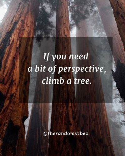 Quotes About Climb The Tree