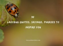 35 Ladybug Quotes, Sayings, Phrases To Inspire You