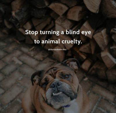 Animal Abuse Quotes Images