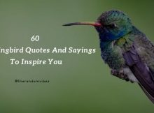 60 Hummingbird Quotes And Sayings To Inspire You