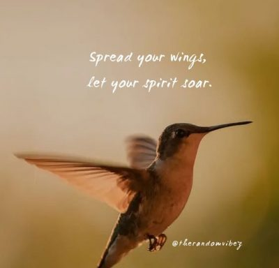 Hummingbird Quotes