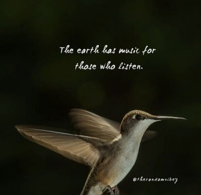 Hummingbird Quotes Images