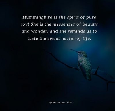 Hummingbird Quotes Photos