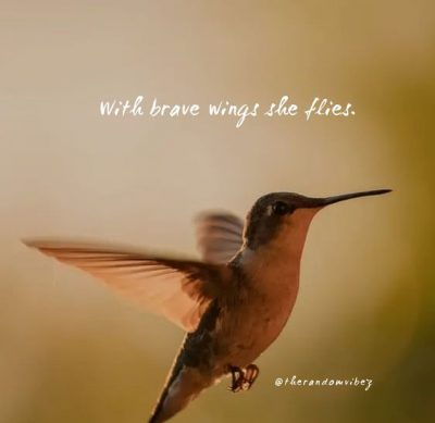 Hummingbird Sayings