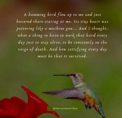 Inspirational Hummingbird Quotes