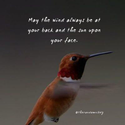 Life Hummingbird Quotes