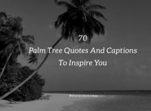 Palm Tree Quotes And Sayings