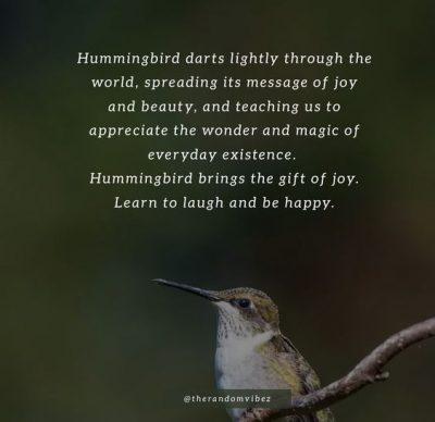 Quotes About Hummingbird
