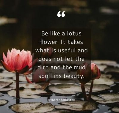 Little Flower Life Quotes