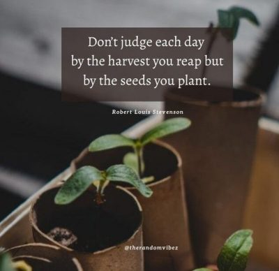 Inspirational Planting Seeds Quotes