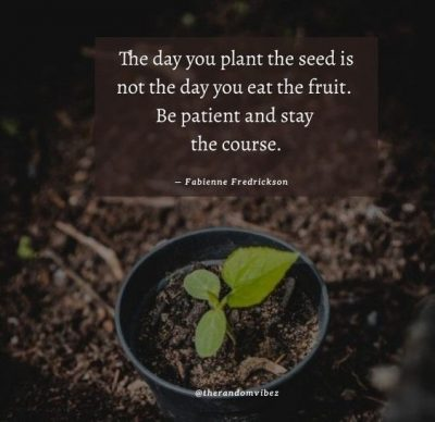 Patience Planting Seeds Quotes