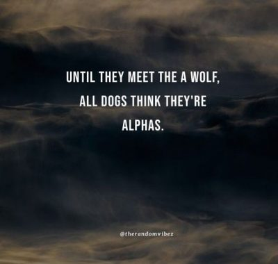 Funny Alpha Male Quotes